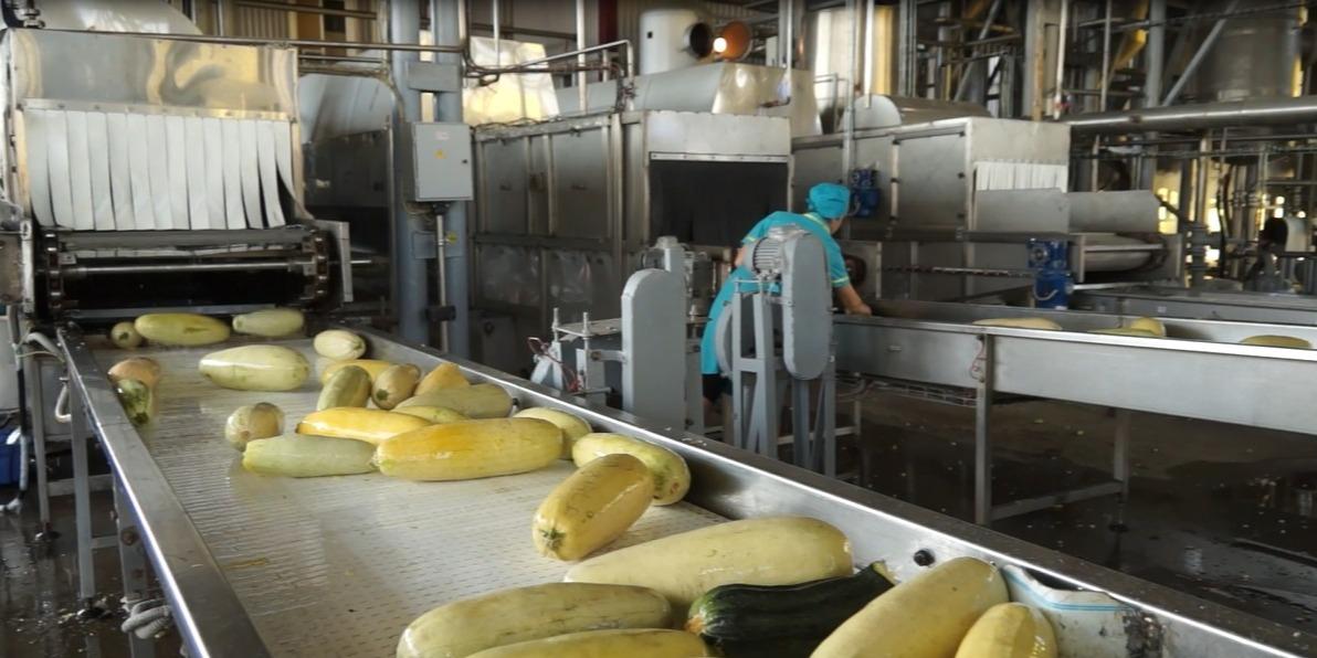 Сезон производства кабачковой икры